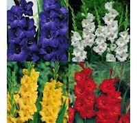 Mieczyk - 4 kolory - niebieski, biały, czerwony, żółty