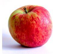 Jabłoń Piros sadzonka