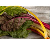 Burak liściowy – mieszanka odmian