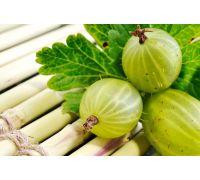 Agrest zielonożółty - Mucurines - forma pienna - sadzonka