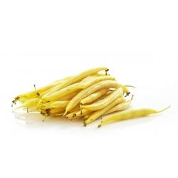 Fasola szparagowa żółtostrąkowa Złota Saxa - 160 nasion