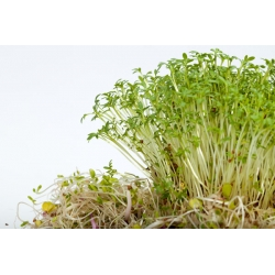 Rzeżucha - 4500 nasion