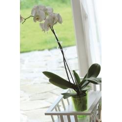 Różowa spirala - Podpórka do storczyka i innych kwiatów