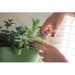 Herbs Cut - Zielone nożyczki do ziół z potrójnym ostrzem