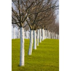 Wapno do bielenia drzew i krzewów - Dolpol - 4 kg