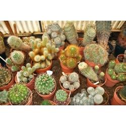 Ziemia do kaktusów i sukulentów - 5 litrów