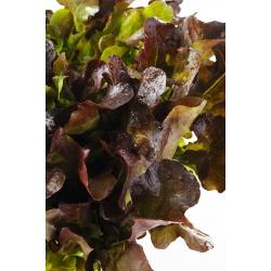 Sałata dębolistna - Red Salad Bowl - 1150 nasion