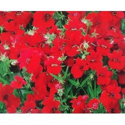 Nemezja, jawnostka czerwona - 1300 nasion