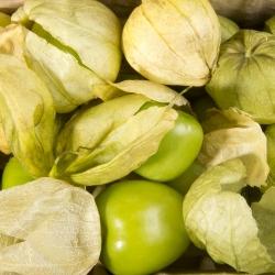 Miechunka pomidorowa Amarylla - polska odmiana! - 340 nasion