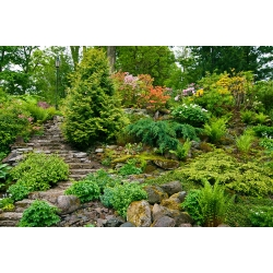 Mieszanka bylin do ogrodów skalnych - 25 nasion