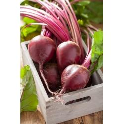 BIO Burak ćwikłowy - Czerwona Kula - Certyfikowane nasiona ekologiczne - 500 nasion
