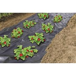 Folia perforowana do ściółkowania truskawek - 1,4 m x 10 m