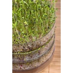 Hodowla kiełków - Naczynie do produkcji kiełków - Kiełkownica - 2 szalki