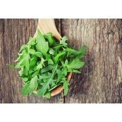 BIO Rukola - Certyfikowane nasiona ekologiczne - 800 nasion