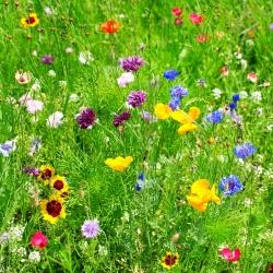 Mieszanka roślin dziko rosnących jednorocznych i wieloletnich - 100 nasion