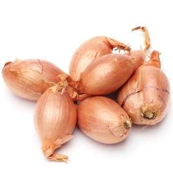 Cebula szalotka - Zebrune - 855 nasion