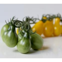 Pomidor wysoki żółty Yellow Pearshaped - 120 nasion