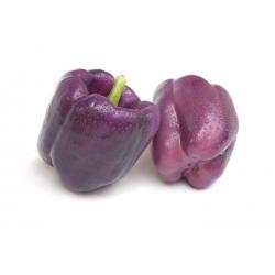 Papryka słodka do uprawy w gruncie - ODA - 80 nasion