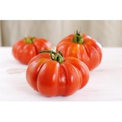 Pomidor Brutus