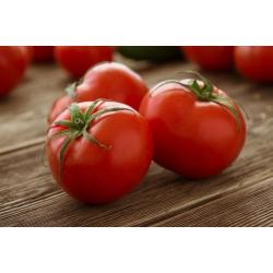 Pomidor wysoki – Adam F1 - 64 nasion