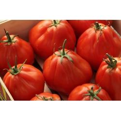 Pomidor – wysoki Red Pear - 120 nasion