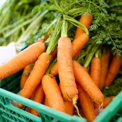 Marchew jadalna Nantes 3 - średnio wczesna - 4250 nasion
