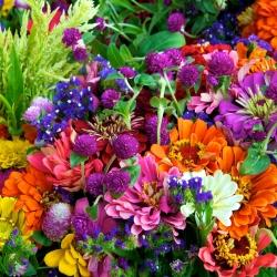 Mieszanka roślin jednorocznych na kwiat cięty - 60 nasion