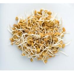 Nasiona na kiełki Smak Zdrowia - kozieradka