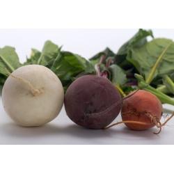 Kolorowe buraki ćwikłowe - mieszanka nasion buraka w różnych kolorach - 450 nasion