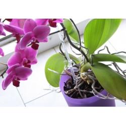 Coubi Dsto - doniczka do storczyków - 12,5 cm średnicy - fioletowa matowa