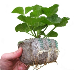 GrowBlock - pęczniejąca eko-doniczka - 100 x 100 mm