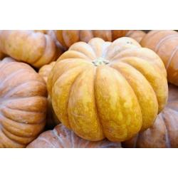 Dynia piżmowa Muscade de Provence - miąższ bardzo aromatyczny - 18 nasion