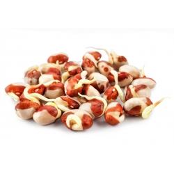Nasiona na kiełki - fasola Adzuki - 550 nasion