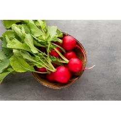 Rzodkiewka Cherry Belle - 850 nasion
