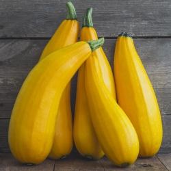 Cukinia Goldena - 27 nasion