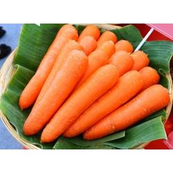 Marchew Amsterdam 3 - 100 gram - 85000 nasion
