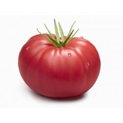 Pomidor Malinowy Warszawski - gruntowy - 175 nasion