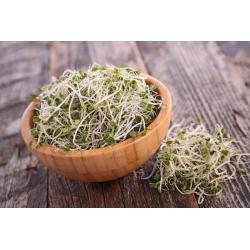 BIO Nasiona na kiełki - Brokuł - Certyfikowane nasiona ekologiczne - 3000 nasion