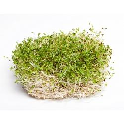 BIO Nasiona na kiełki - Lucerna - Certyfikowane nasiona ekologiczne