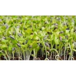 BIO Nasiona na kiełki - Słonecznik - Certyfikowane nasiona ekologiczne