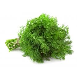 BIO Koper ogrodowy - Certyfikowane nasiona ekologiczne - 2800 nasion