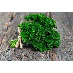 BIO Pietruszka naciowa Moss Curled 2 - Certyfikowane nasiona ekologiczne - 3000 nasion