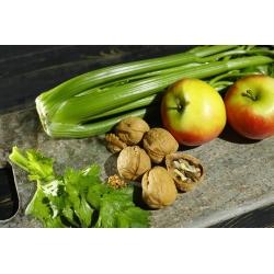 Seler naciowy Plein Blanc Pascal - intensywnie zielony, najlepszy do zupy - 2600 nasion