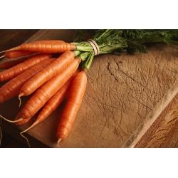 Domowy ogródek - Marchew Touchon - do uprawy w domu i na balkonie - 4250 nasion