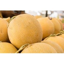 Melon Junior - miąższ pomarańczowy, gruby i aromatyczny - 40 nasion