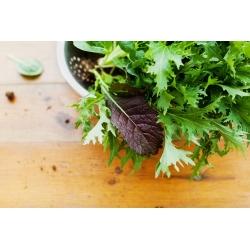 Mizuna - mieszanka odmian - Baby Leaf - 250 nasion