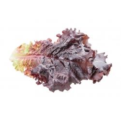 Sałata liściowa Apache - bardzo ozdobna, słodka i ostra w smaku jednocześnie - 1250 nasion