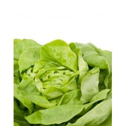 Sałata masłowa Ewelina - gładkie i smaczne liście - 1000 nasion