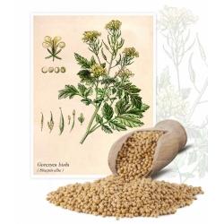Gorczyca biała konsumpcyjna - 1 kg - 130000 nasion