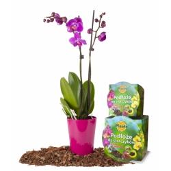 Podłoże do storczyków z doniczką - Planta - 12 cm